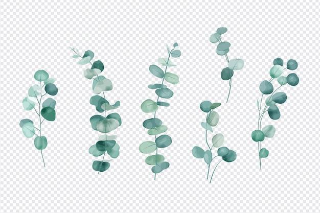 Conjunto de folhas de eucalipto isoladas em fundo transparente