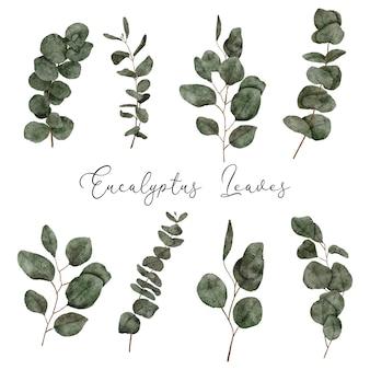 Conjunto de folhas de eucalipto pintadas à mão em aquarela