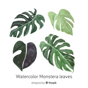 Conjunto de folhas de monstera em aquarela