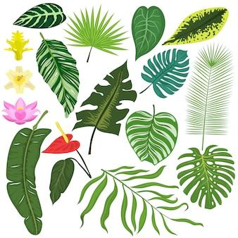 Conjunto de folhas de natureza