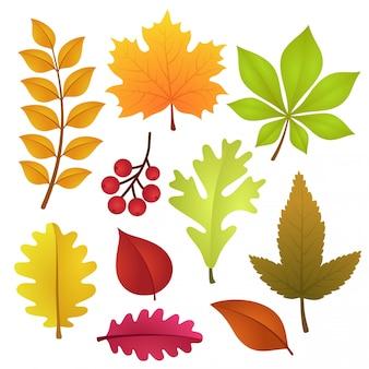 Conjunto de folhas de outono coloridas e bagas