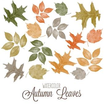 Conjunto de folhas de outono coloridas em aquarela