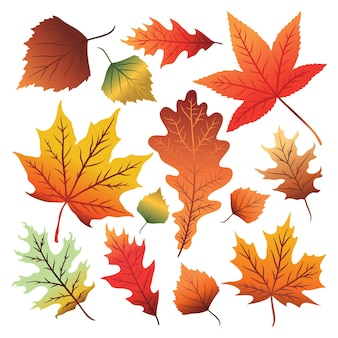Conjunto de folhas de outono coloridas isoladas no fundo branco