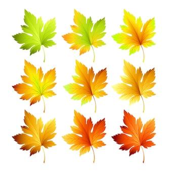 Conjunto de folhas de outono coloridas.
