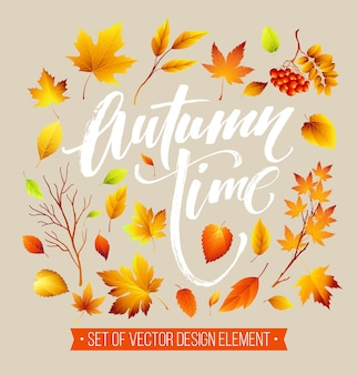 Conjunto de folhas de outono coloridas