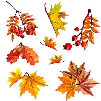 Conjunto de folhas de outono com bagas e carvalho