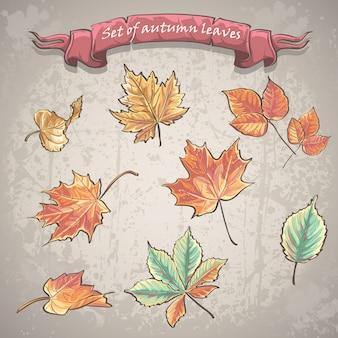 Conjunto de folhas de outono de bordo, castanheiros e outras árvores.