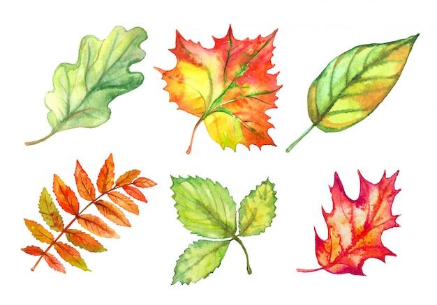 Conjunto de folhas de outono em aquarela. vetor
