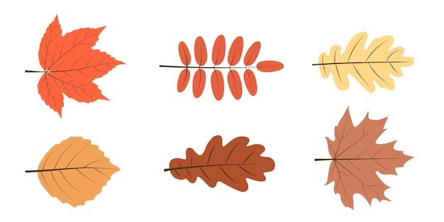 Conjunto de folhas de outono em branco