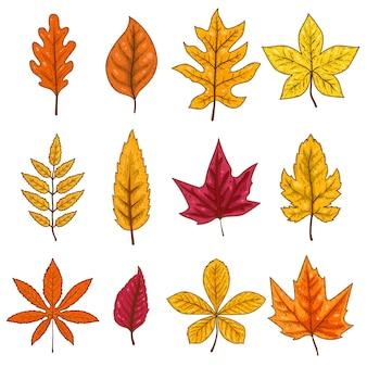 Conjunto de folhas de outono em fundo branco. elemento