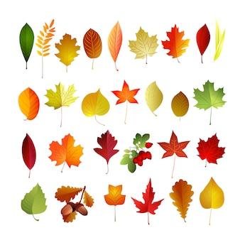 Conjunto de folhas de outono. ilustração dos desenhos animados