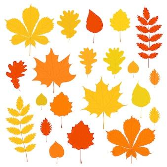 Conjunto de folhas de outono isolado no branco