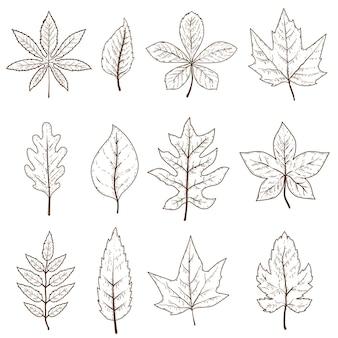 Conjunto de folhas de outono isolado no fundo branco. elemento