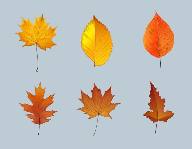 Conjunto de folhas de outono, isolado no fundo branco. estilo simples simples dos desenhos animados. ilustração isolada do vetor. design para adesivos, logotipo, web e aplicativo móvel.