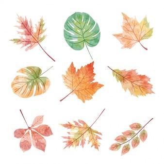 Conjunto de folhas de outono temporada em aquarela