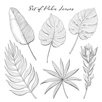 Conjunto de folhas de palmeira desenhadas à mão e flor protea