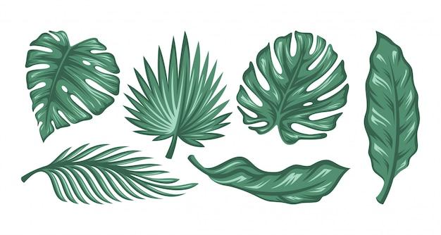 Conjunto de folhas de palmeira isolado no fundo branco