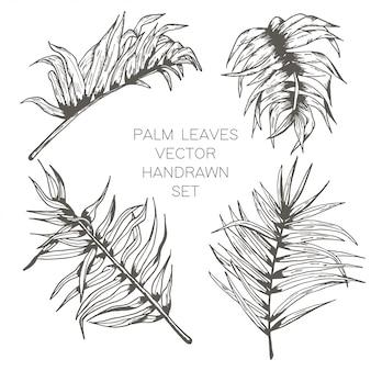 Conjunto de folhas de palmeira linha mão desenhada sem emenda