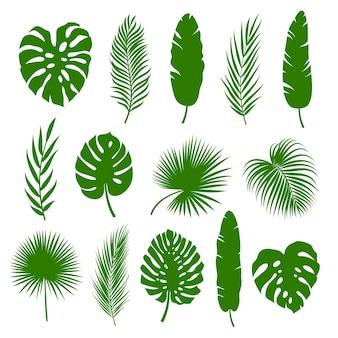 Conjunto de folhas de palmeira, silhuetas de plantas tropicais