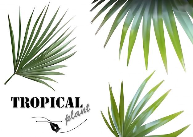 Conjunto de folhas de palmeira tropical - ilustrações de planta tropical fotorrealistas e detalhadas