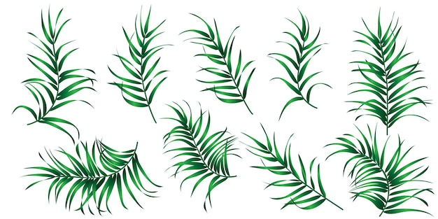 Conjunto de folhas de palmeira tropical isoladas