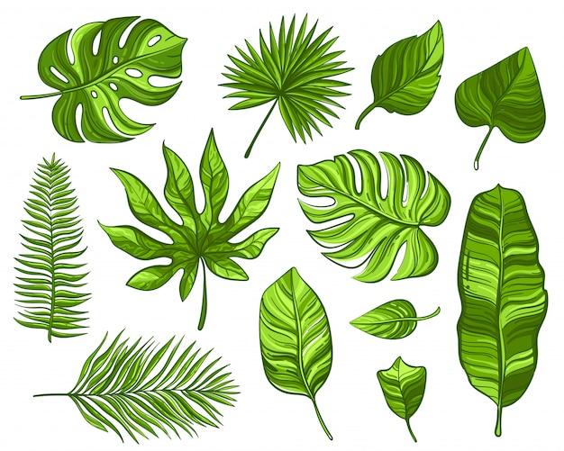 Conjunto de folhas de palmeira tropical verde