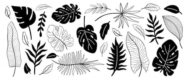 Conjunto de folhas de plantas tropicais. elemento floral botânico