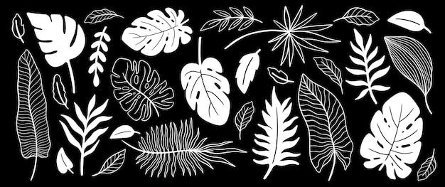 Conjunto de folhas de plantas tropicais. fundo de elemento floral botânico. design para decoração de casa, tecido, tapete, embalagem.