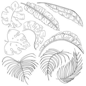 Conjunto de folhas de plantas tropicais isolado no branco
