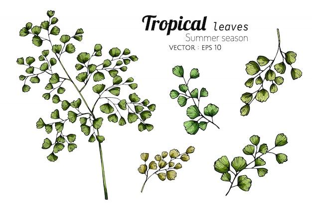 Conjunto de folhas de samambaia desenho ilustração