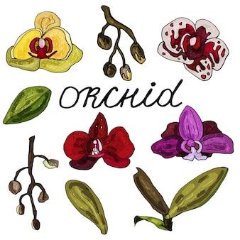 Conjunto de folhas e flores de orquídea em um fundo branco isolado. o contorno é desenhado à mão