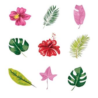 Conjunto de folhas e flores tropicais.