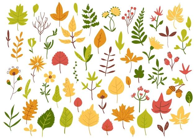Conjunto de folhas e frutos de outono, estilo desenhado à mão, ilustração vetorial