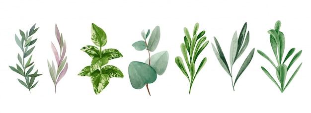 Conjunto de folhas e galhos em aquarela, coleção de hortaliças mão desenhada