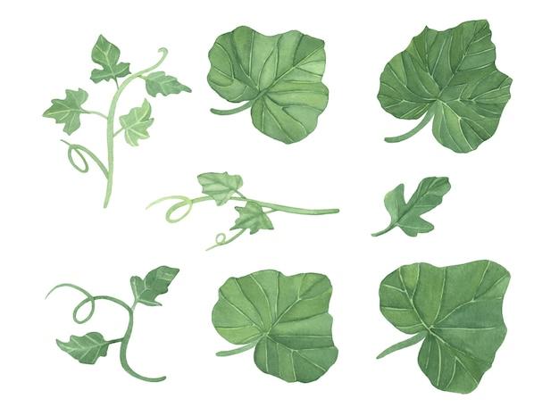 Conjunto de folhas e videiras de abóboras aquarela verdes
