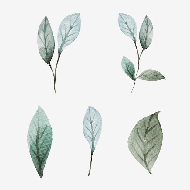 Conjunto de folhas em aquarela pintadas à mão