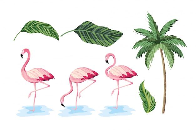 Conjunto de folhas exóticas e palmeira tropical
