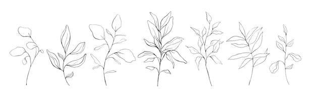 Conjunto de folhas florais de arte botânica linha, plantas. esboço de mão desenhada ramos isolados no fundo branco. ilustração vetorial