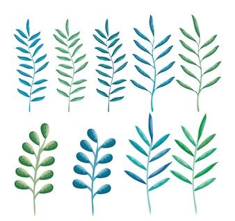Conjunto de folhas ícones da planta