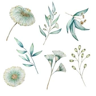 Conjunto de folhas longas de eucalipto em aquarela, ramos e flores. bebê eucalipto pintado à mão.