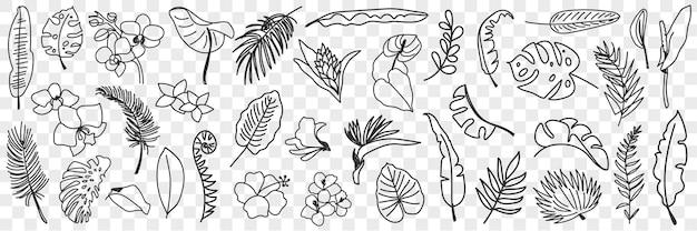 Conjunto de folhas naturais doodle