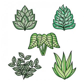 Conjunto de folhas natureza