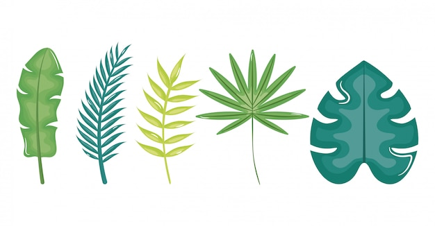 Conjunto de folhas palmeiras tropicais