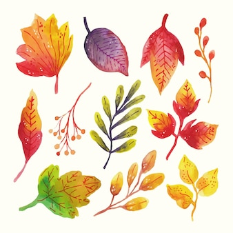 Conjunto de folhas pintadas à mão em aquarela