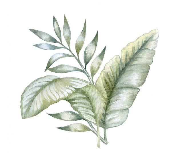Conjunto de folhas tropicais. aquarela botânica de selva