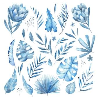 Conjunto de folhas tropicais azuis e ilustração em aquarela de flores protea