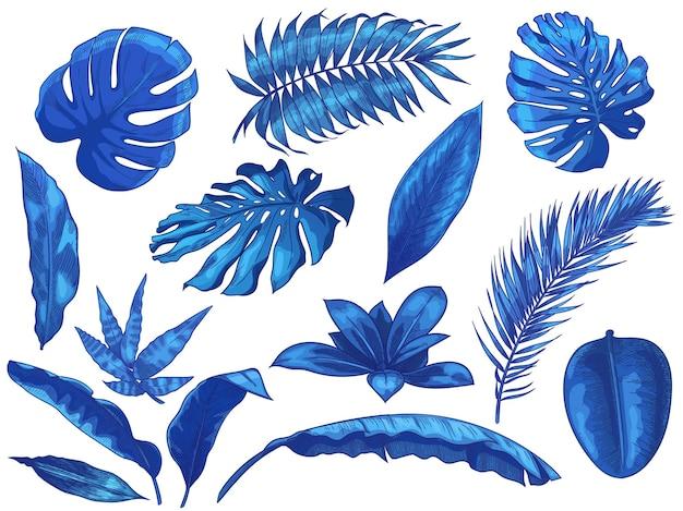 Conjunto de folhas tropicais azuis