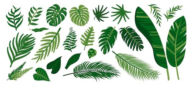 Conjunto de folhas tropicais coleção