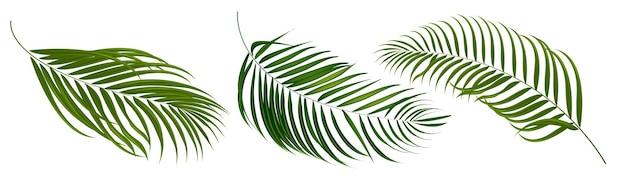 Conjunto de folhas tropicais de coco e palmeira do elemento vetor.
