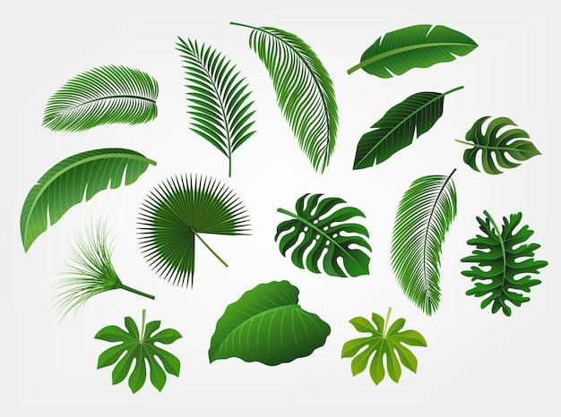 Conjunto de folhas tropicais isolado